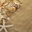 Shells and stones on sand — Stockfoto