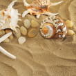Shells and stones on sand — Stock Photo #4323169
