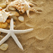 Shells and stones on sand — Stock Photo #4323178