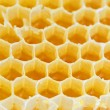 Honeycomb isolated on white — Stockfoto #4730896