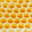 Honeycomb isolated on white — Stok fotoğraf
