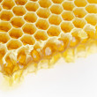 Honeycomb isolated on white — Stockfoto