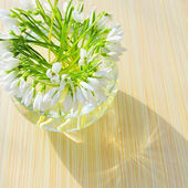 Snowdrops in a vase — Stock Photo