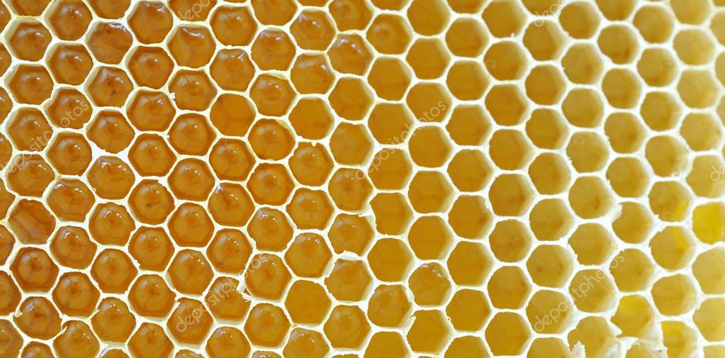 Honeycomb isolated on white — Stock Photo #4730890