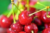 Ripen cherries — Stock Photo