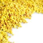 Macro pollen — Stock Photo