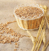 Wheat seeds on rough material — Stock Photo