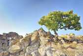 Single tree on rocks — Stock Photo