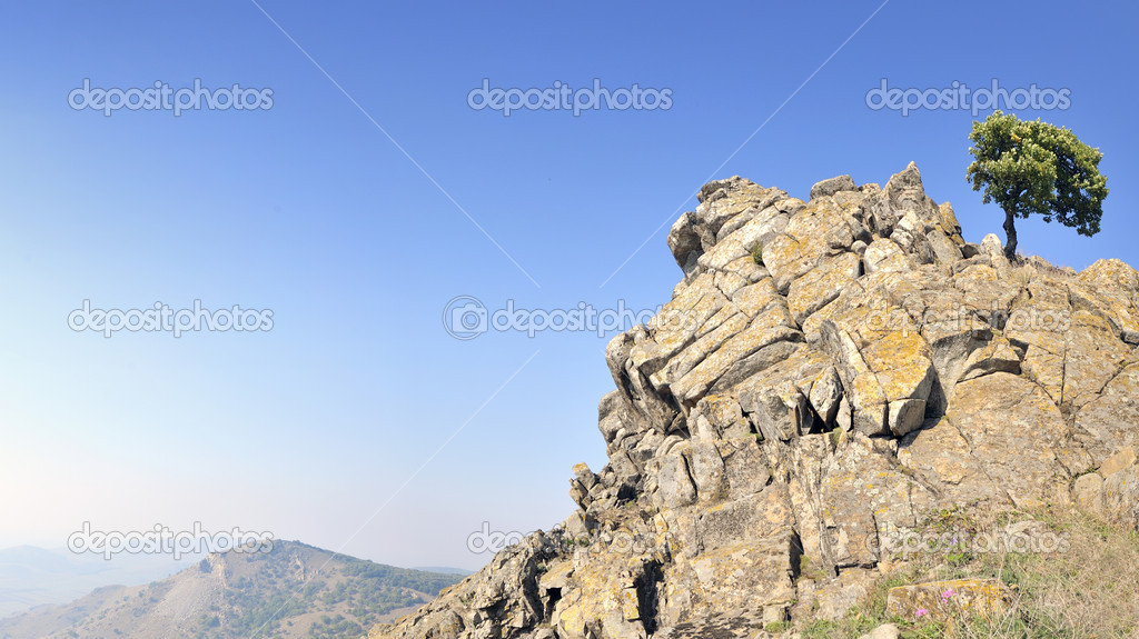  Single tree on rocks  Stock Photo #5001747