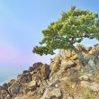Tree on rocks — Stock Photo
