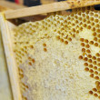 Honeycomb in the wooden frame — Stock Photo