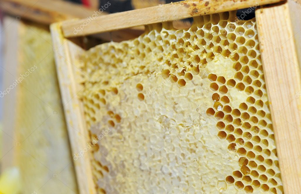 Honeycomb in the wooden frame — Stock Photo #5297433
