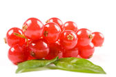 Currants on white background — Stock Photo