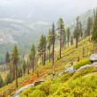 Stock Photo: Sparse Yosemite Forest