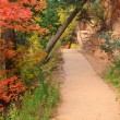 Forest Path in the Fall — Stock Photo