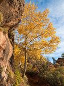 цвета осени в сион — Стоковое фото
