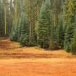 Stock Photo: Yosemite Meadow and Forest