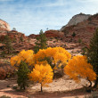 ������, ������: Fall Colors at Zion