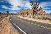 Joshua Tree Road — Stock Photo