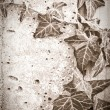 Grunge Ivy — Stock Photo