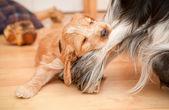 Köpek ve kemik — Stok fotoğraf