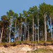 Stock Photo: Forest on edge of breakage