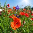 Poppy field - Foto Stock