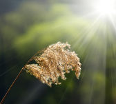 Meadow grass and sun — Stock Photo