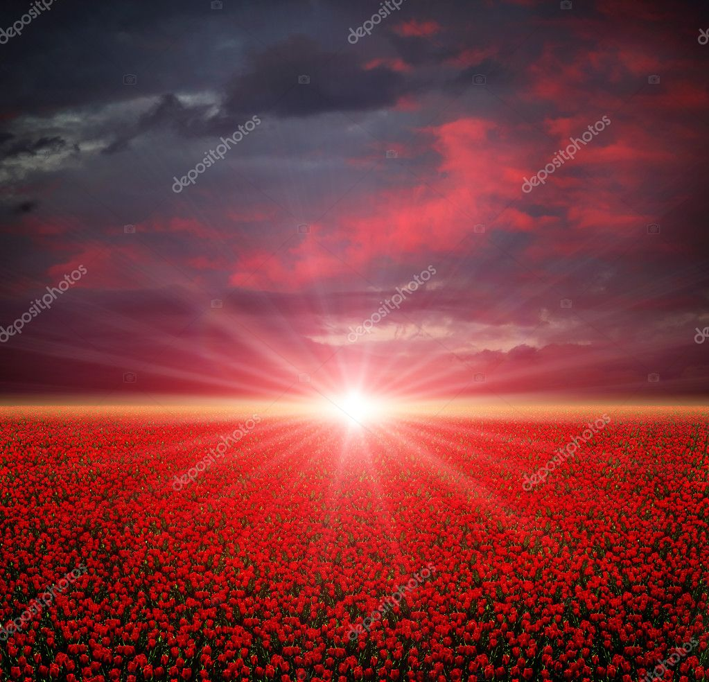 Summer poppies field at sunset — Stock Photo #4766661