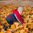 Boy played with autumn leaves — Stock Photo