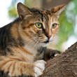 Cat climbing on a tree — Stockfoto