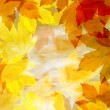 Foto Stock: Background from autumn leaves