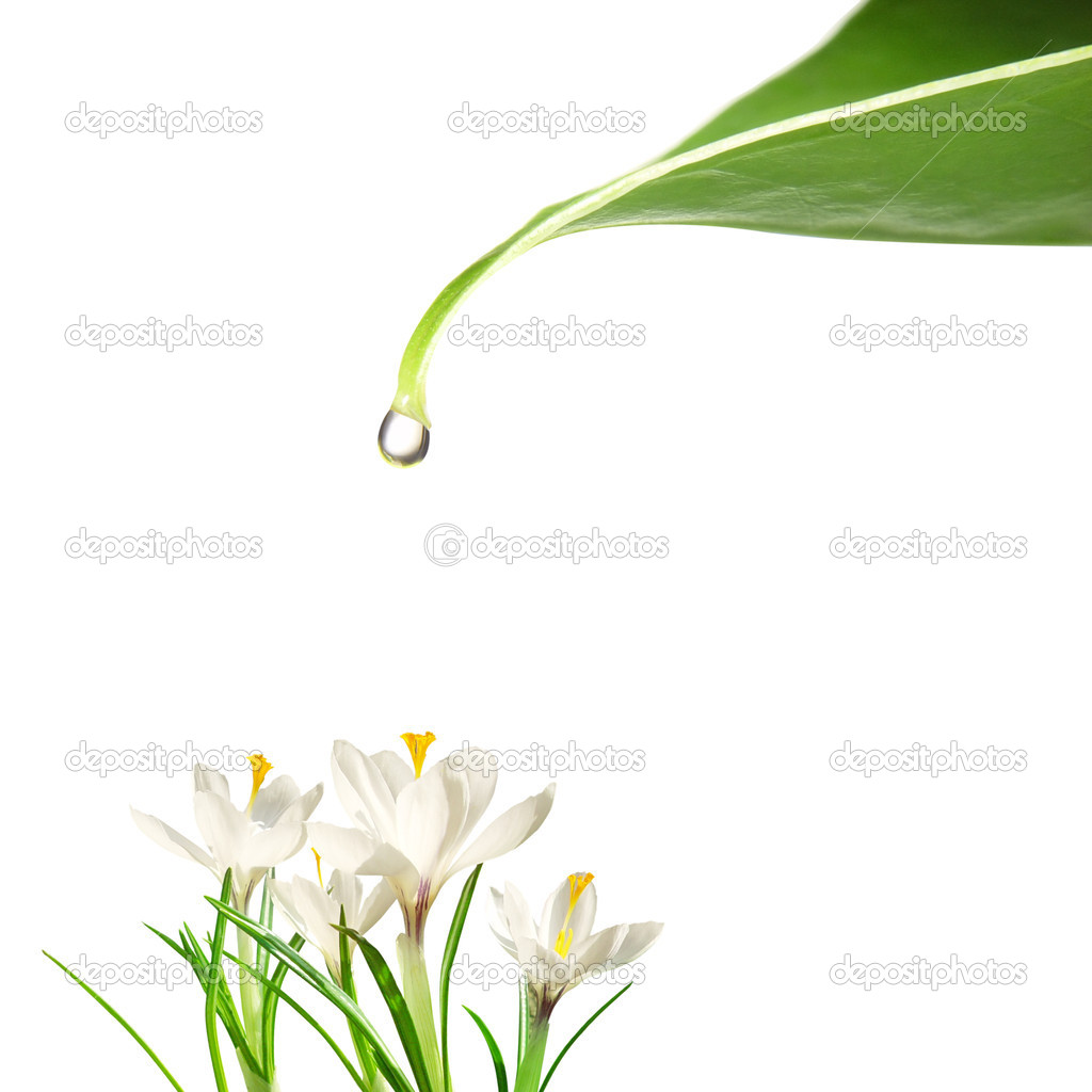 Drop of water falling on flowers — Stock Photo #5131096