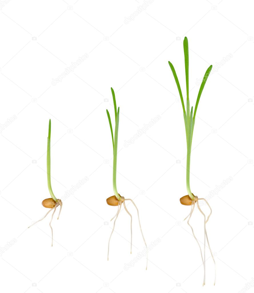 Young seedlings of plants. Stages of growth — Stock Photo #5356983