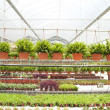 Stock Photo: Nursery garden