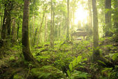 Rainforest — Stock Photo