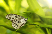 Butterfly insect — Stock Photo