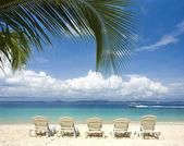 Beach with coconut trees — Stock Photo