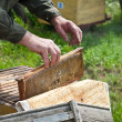 The bee-keeper gets honey — Foto de Stock