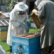 The bee-keeper gets honey — Stock Photo