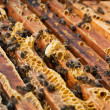 Honeycombs in a beehive — Stock Photo