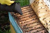 Honey in honeycombs — Stock Photo