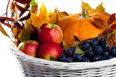 Autumn's basket — Stock Photo