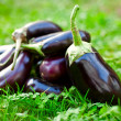 Raw eggplants in grass - Foto de Stock