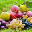 Bunch of fruits outdoor - Stock Photo
