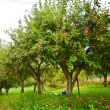 Manzanal de los árboles — Foto de Stock