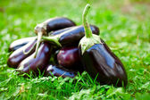 Raw eggplants in grass — Stock Photo