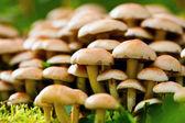 Surowy bakłażany w trawie — Zdjęcie stockowe