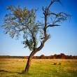 Solitary tree in a meadow — Stock Photo