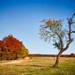 Stock Photo: Autumnal landscape